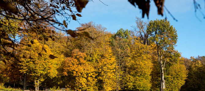 Herbstbilder-Sammlung (bis 2016)